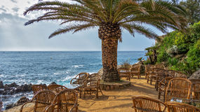 Coffee tables under a palm tree on the beach Royalty Free Stock Photography