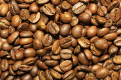 Coffee Tanzania Kilimanjaro Stock Photo