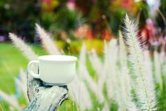 Coffee or tea cup on branch in field. Coffee or tea cup on branch in grass field stock photos