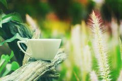 Coffee or tea cup on branch in grass. Field royalty free stock image