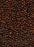 Coffee texture Stock Image