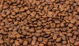 Coffee texture. coffee beans as background wallpaper. arabica cofee bean Royalty Free Stock Photography