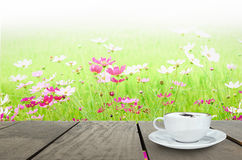 Coffee time and Field of cosmos flower with green background Stock Photos