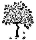 Coffee tree,. Illustration 8 Stock Photo