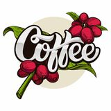 Coffee logo. Coffee tree branch with beans royalty free illustration