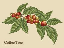 Coffee tree elements Stock Image