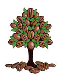 The coffee tree. The tree on which grow coffee beans and green leaves. Vector Stock Photos