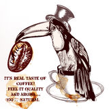 Coffee vector background or poster with hand drawn toucan bird  Stock Photos