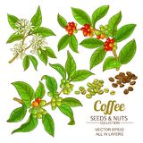 Coffee vector set. Coffee branches vector set on white background Stock Photos