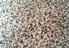 Green coffee beans are unroasted. Coffee wallpaper from Chiang Mai, Thailand Stock Photos