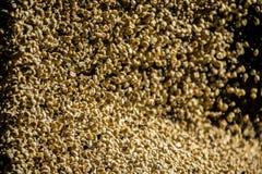 Coffee wallpaper. Dry coffee bean rain royalty free stock images