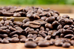 Coffee on wooden background Fresh coffee beans on wood Stock Images