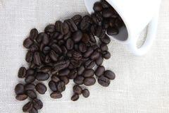 Coffeebean Fotografia Stock Libera da Diritti