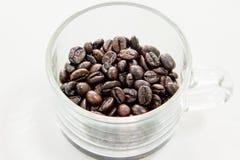 Coffeebean Royaltyfria Bilder