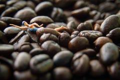 Coffeebean simning Arkivbilder