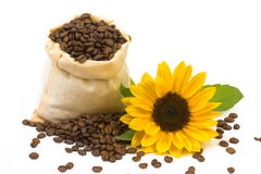 Coffeebeans solrosor Arkivfoton