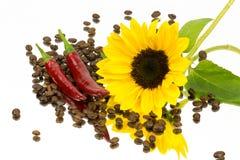Coffeebeans solrosspegel Arkivbilder