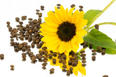 Coffeebeans sunflower mirror 2 Royalty Free Stock Image