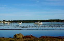 Coffin Bay Oyster Beds Stock Photos