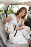 Coffre-fort de chien dans la voiture Photo libre de droits