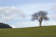 Coffret de garde forestier Photos stock