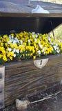 Cofre del tesoro con las flores Imágenes de archivo libres de regalías