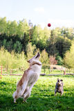 Cogida de la bola Fotos de archivo
