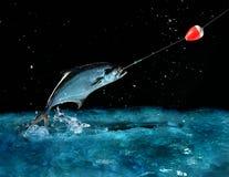 Cogida de un pescado grande en la noche Foto de archivo
