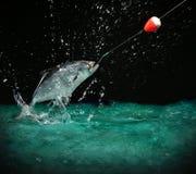 Cogida de un pescado grande en la noche imagen de archivo libre de regalías