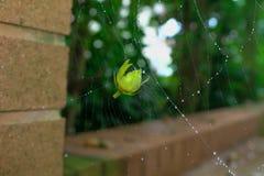 Cogido en la jerarquía de la araña imagenes de archivo
