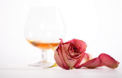 Cognac and rose Royalty Free Stock Images