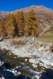 COGNE VALLE D'AOSTA/ITALY - OKTOBER 26: Nunnaläsning vid flod I royaltyfri bild