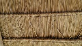 Cogon grass roof Royalty Free Stock Photo