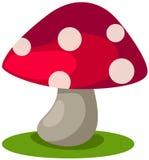 Cogumelo Imagem de Stock