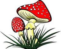 cogumelo Fotografia de Stock Royalty Free