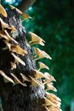cogumelo Fotos de Stock Royalty Free