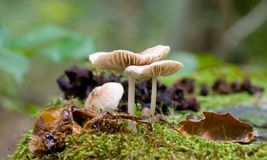 Cogumelo 5 Fotografia de Stock