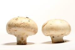 Cogumelo Imagem de Stock Royalty Free