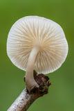 cogumelo Fotografia de Stock
