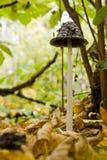 Cogumelo alto do outono Fotografia de Stock
