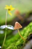 Cogumelo amarelo brilhante Imagens de Stock