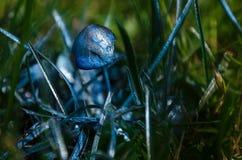 Cogumelo azul do cogumelo venenoso, no fundo da grama verde Fotografia de Stock