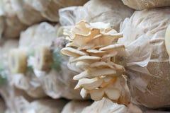 Cogumelo branco fotografia de stock