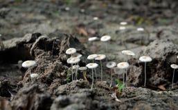 Cogumelo branco Fotografia de Stock Royalty Free