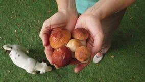 Cogumelo branco da floresta nas mãos filme