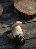 Cogumelo. Cep. Foto de Stock