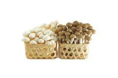 Cogumelo: Cogumelo de Shimeji Imagem de Stock Royalty Free