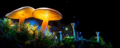 cogumelo Cogumelos de incandescência da fantasia na floresta da obscuridade do mistério Fotografia de Stock
