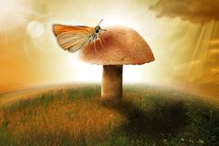 Cogumelo com a borboleta grande na natureza fotografia de stock