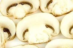 Cogumelo comum Fotos de Stock